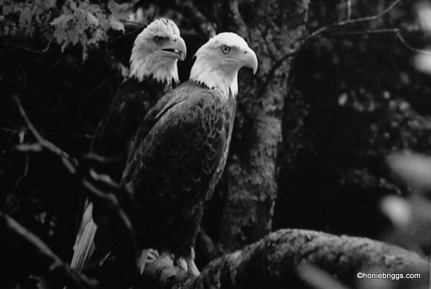 1-eagles-001