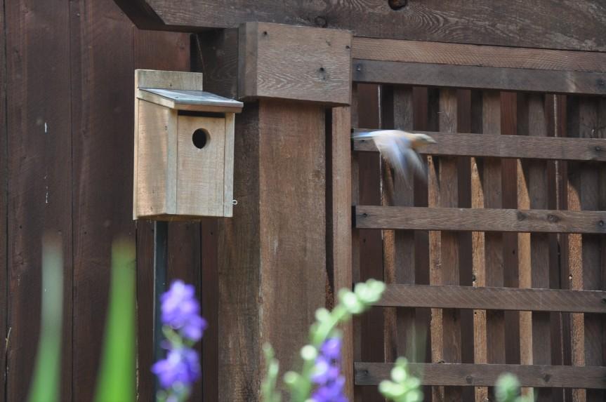 bird_dash