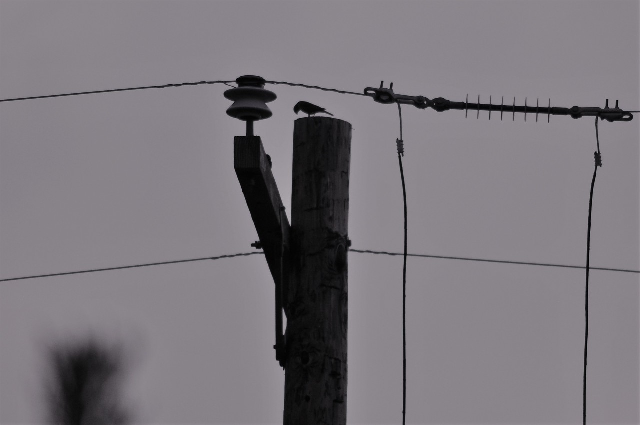 bird_on_a-wire